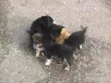 Злые собаки напали на кота
